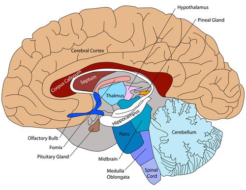 drug addiction limbic system